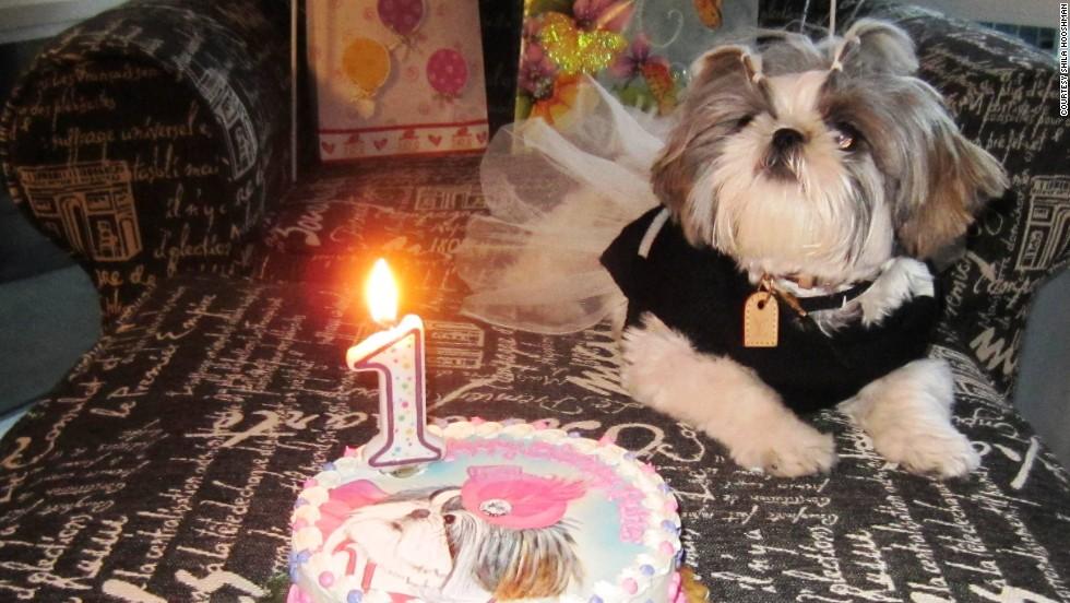San Diego Resident Shila Hooshmand Celebrated Ruffle39s First Birthday In A Big