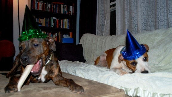 Here, Hand and Troka's dogs, Oscar and Sula, feast on birthday treats.