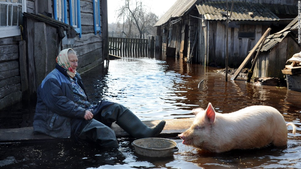 A woman feeds a pig in her yard during a flood in the Belarus village of Snyadin near the Pripyat river on April 16.