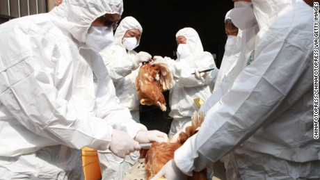 Health workers collect blood samples from chickens at a poultry farm on April 17, 2013 in Taizhou, China.