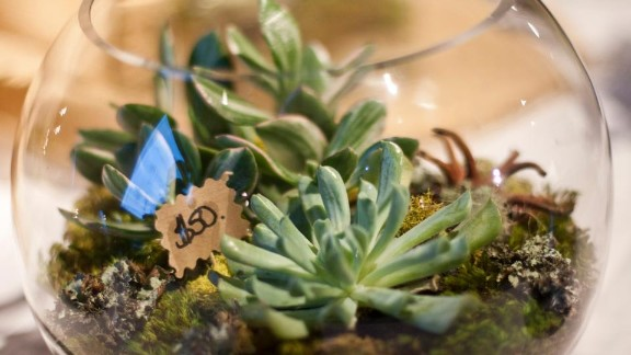 Melissa Hamburg-Hamby of Seattle is an interior designer. She says she started making terrariums as a form of stress relief and has now made more than 100.