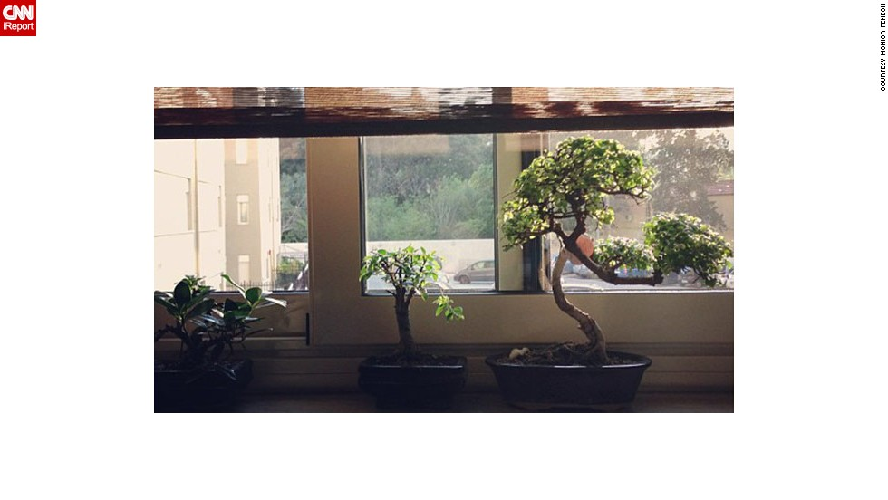 "Monica Fenech of Palermo, Italy, shared this image of a <a href=""http://ireport.cnn.com/docs/DOC-959176"">bonsai display</a> she created."