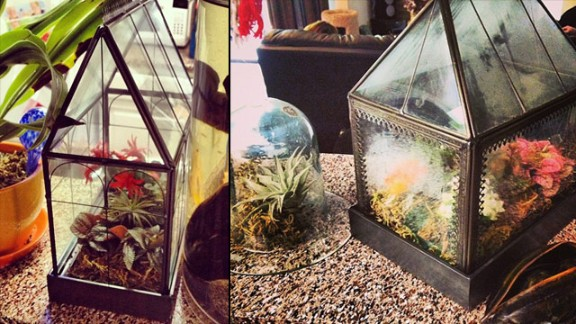 """Creating a terrarium can be a very comforting art form for some. Tracey Martin of Arlington, Texas, says her family inspires her creations, including small greenhouses. """"My grandmother always has a lot of plants around her home, so when I moved to Arlington to go to school, I thought it would be nice to have some too,"""" she said."""