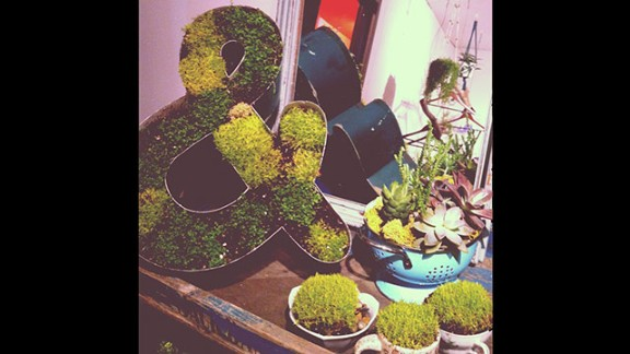 """Thoey Ngo of San Jose, California, runs a boutique shop that sells handmade housing products, and an artist makes green succulent arrangements for her. She says a neighbor gave her some old signs to """"upcycle"""" or reuse for this artistic purpose. This photo has been filtered with Instagram."""