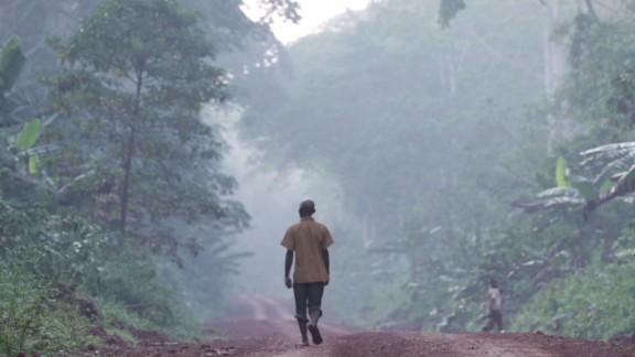 inside africa cameroon rainforest ecosystem a_00070820.jpg