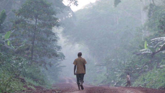 African rainforest fights for survival