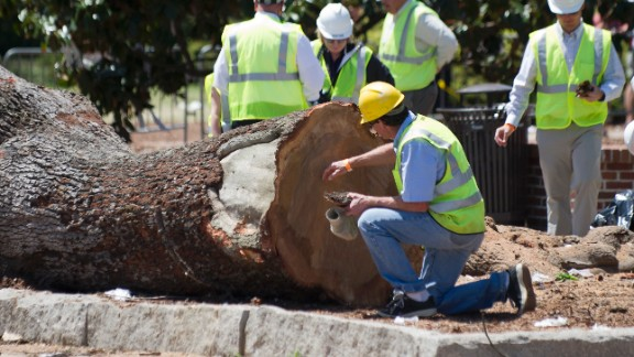 Crews remove pieces of live oaks on Tuesday, April 23, at Toomer