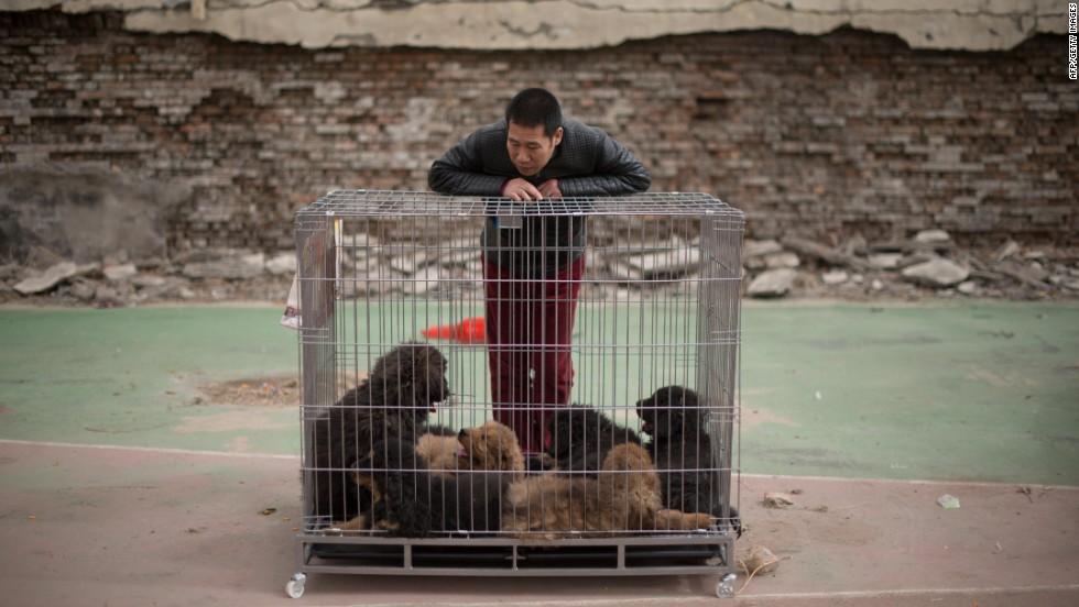Puppy smugglers feed HK's big dog craze - CNN
