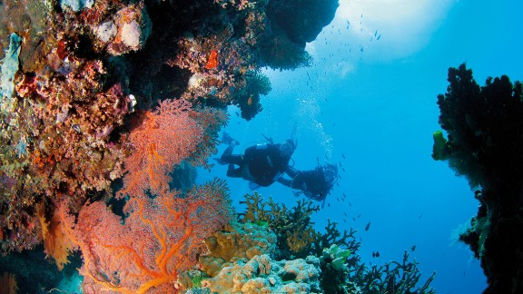 Composed of more than 3,000 individual reefs interspersed with more than 600 topical islands, the world