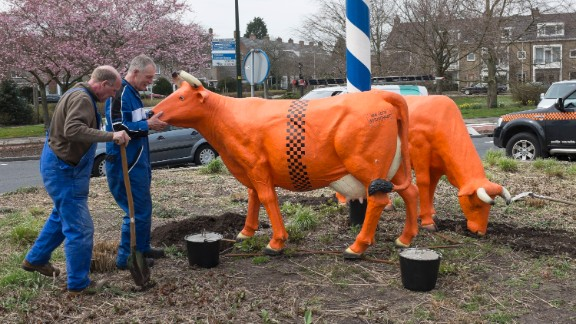 Orange cows are placed on a traffic island in Wassenaar, the hometown of Willem-Alexander and Maxima, on April 17.