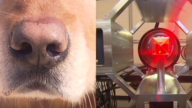 Dogs compete with tech to detect bombs