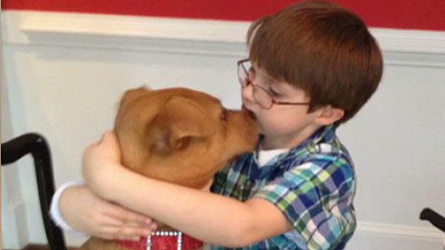 Rescued puppy helps boy with autism