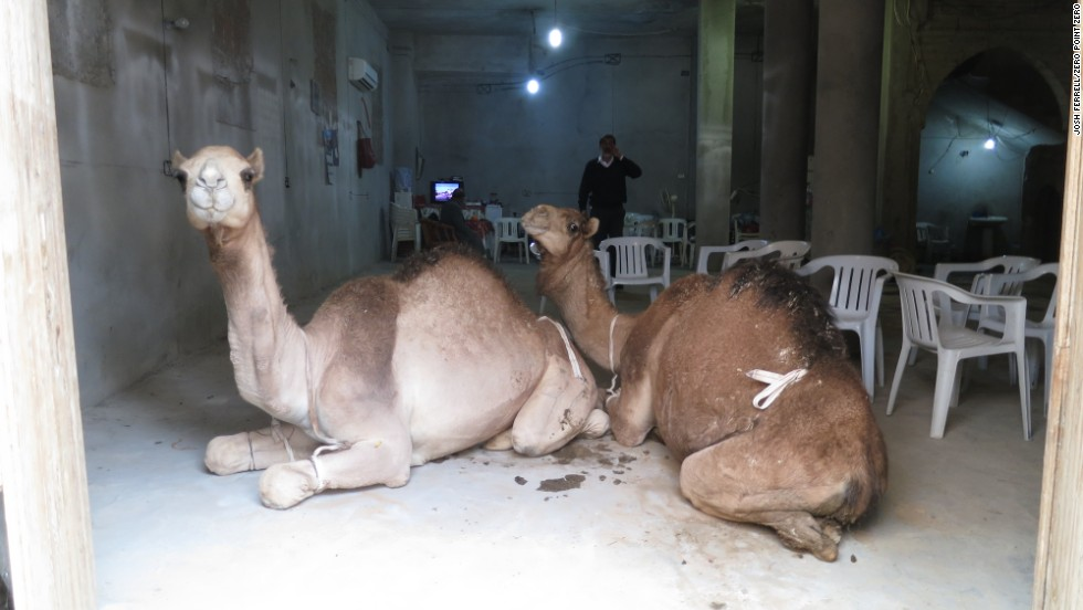 Camels in Old Town, Tripoli.