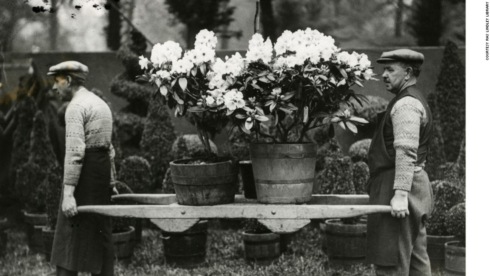 And an earlier age...gardeners carrying pots of flowers during the 1931 Chelsea Flower Show