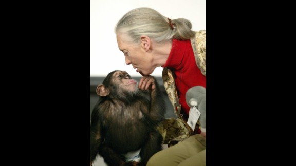 British primatologist Jane Goodall, the world