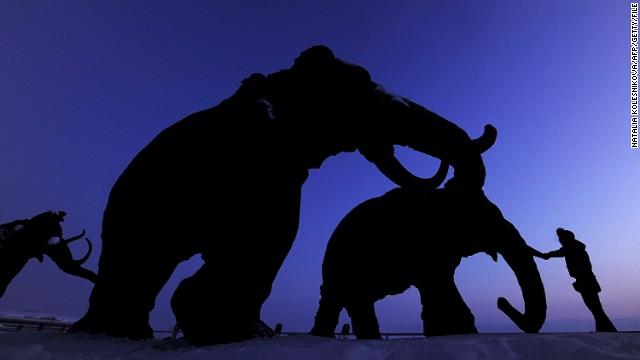 Η αναπαραγωγή μεταξύ των τελευταίων μάλλιων μαμούθ μπορεί να έχει οδηγήσει σε εξαφάνιση