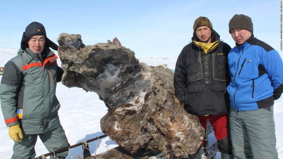woolly mammoth found in ice
