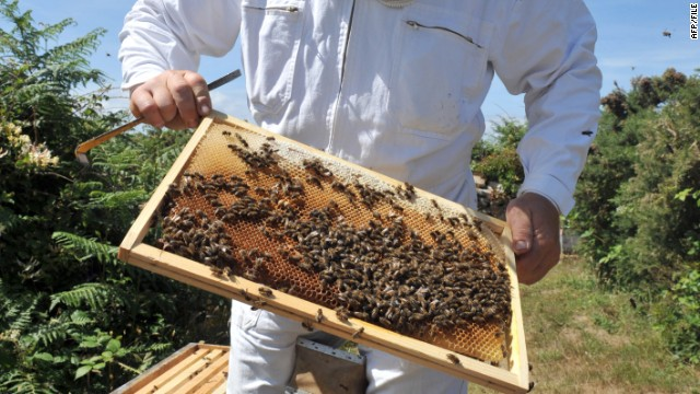 Honey bees not only contribute to food sustainability, they also boost the economy.