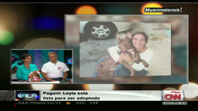 cnnee cala animal rights intvw_00024617.jpg