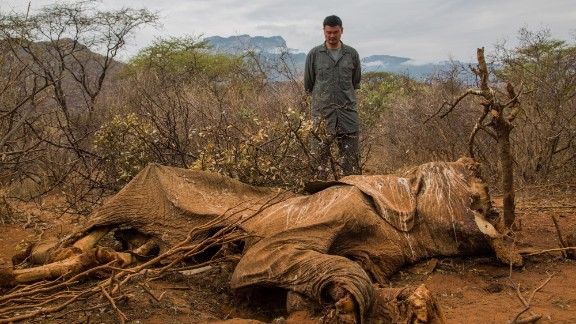 Chinese basketball star and conservationist Yao Ming looks at the carcass of an elephant killed for its tusks in Kenya.