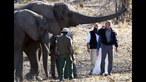 President Bush holds the tusk of an elephant while touring the Mokolodi Nature Reserve in Gaborone, Botswana, on July 10, 2003.