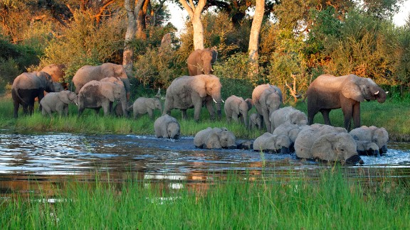 Elephants migrate thousands of miles to find food and mate. Over the years, human development has destroyed many migratory routes. One area that still attracts pachyderms far and wide, however, is Minneriya, Sri Lanka, which bears witness to a great gathering of elephants come August.