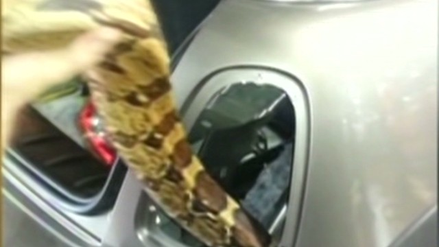pkg snake stuck in body of car_00010425.jpg