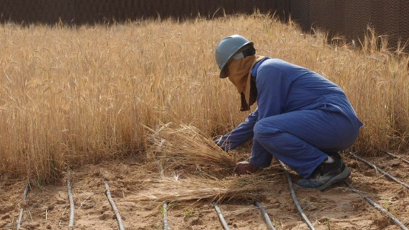 A worker collects the first barley harvested at the facility.
