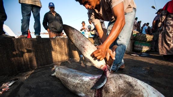 An Indonesian fisherman cuts off a shark