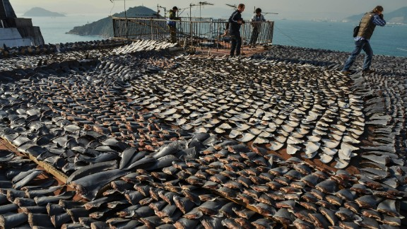 Shark fins dry in the sun on the roof of a factor in Hong Kong, one of the world