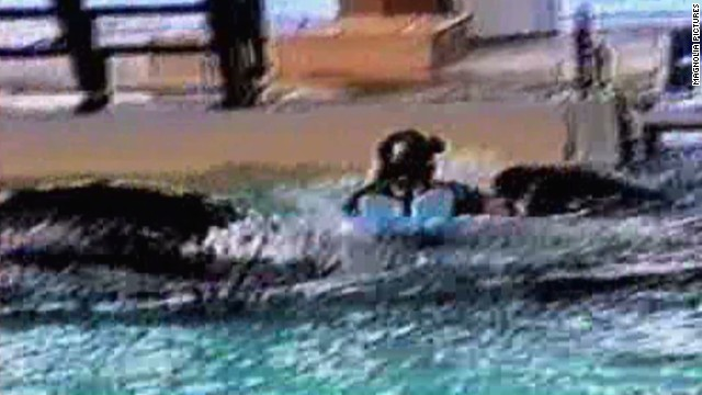 Video shows orca trainer's close call