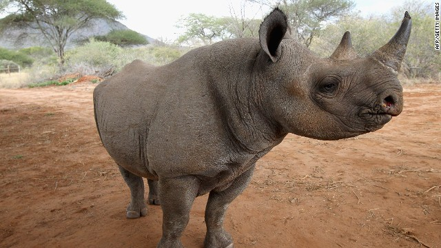 Kenya hopes that implanting microchips in every rhino nationwide will put an end to poaching.