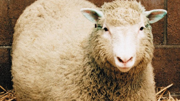 Dolly the Sheep, the world