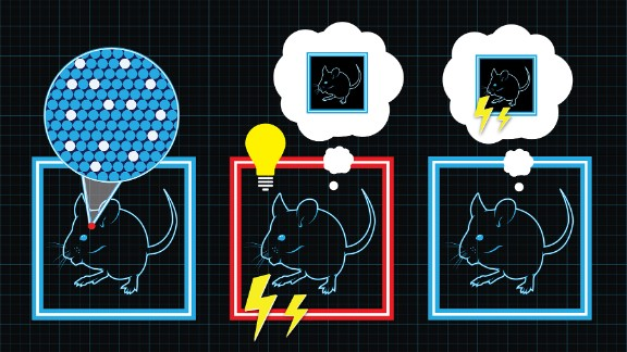 This illustration shows how researchers gave mice a false memory of being shocked in a particular environment.