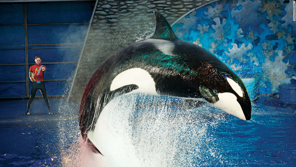 Seaworld Responds To Questions About Captive Orcas Blackfish Film