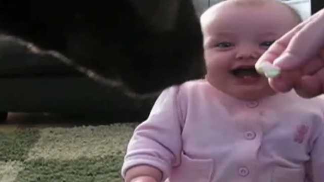 orig distraction baby laughs at dog eating popcorn_00002223.jpg