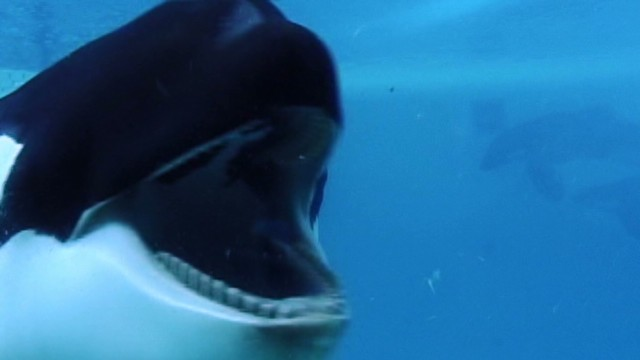 Did SeaWorld influence 'Blackfish' poll?