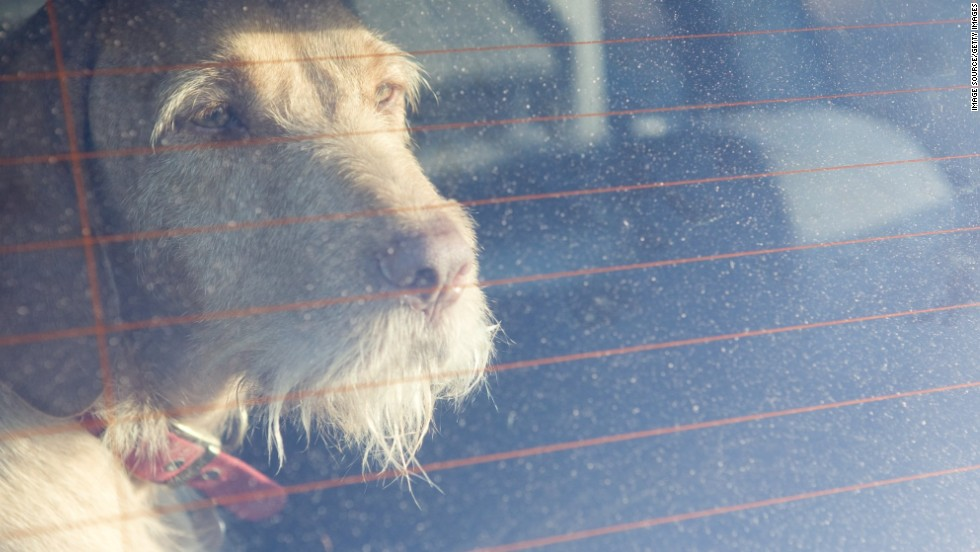 It takes just a few seconds for a parked car to get dangerously hot for your dog. How many seconds does it take for you to run that quick errand while your dog waits in the car?