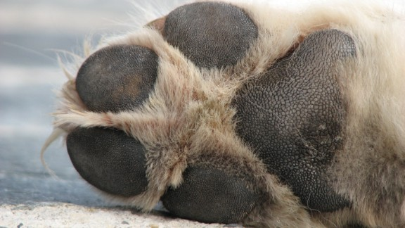 Sidewalks, driveways and the beds of trucks bake all day in the summer sun. Dogs can severely hurt their paws on these surfaces.
