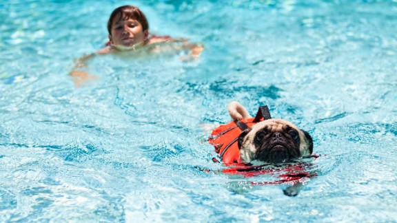 Swimming is fun for some dogs, but they can exhaust themselves struggling to climb steps or pull themselves out of the pool.