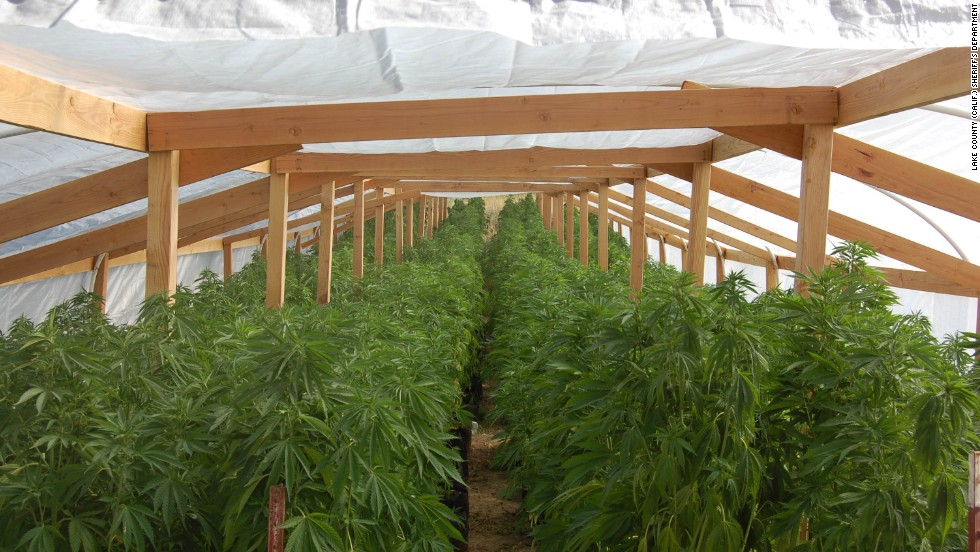 Authorities initially found two greenhouses at the Lake County property with 970 potted and irrigated marijuana plants, according to the complaint, and later discovered a third greenhouse with another 346 plants.