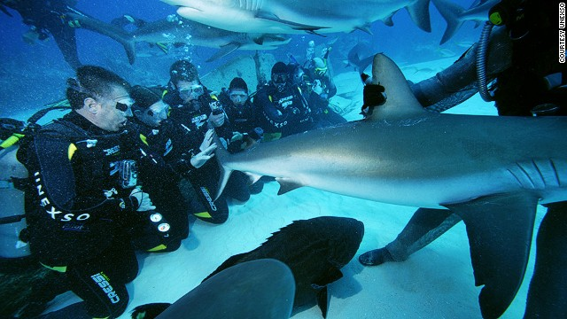 Swimming With Sharks Where To Go