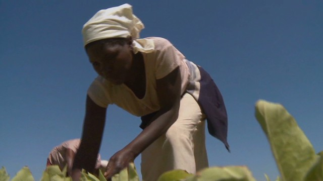 Juma: Biotech can help small farmers