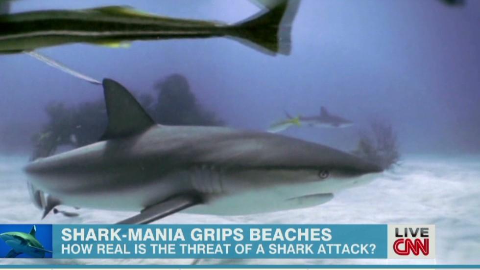 megalodon shark sightings shark week wwwpixsharkcom