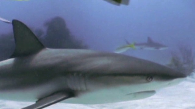 Did Discovery Channel jump the shark?