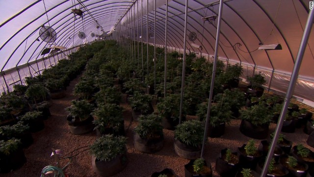 Medical facts of Marijuana