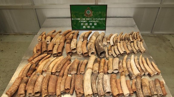 Hong Kong Customs seized 113 ivory in January 2013 at the Hong Kong International Airport. The tusks were shipped from Burundi and destined for Singapore before being discovered during Hong Kong transit.