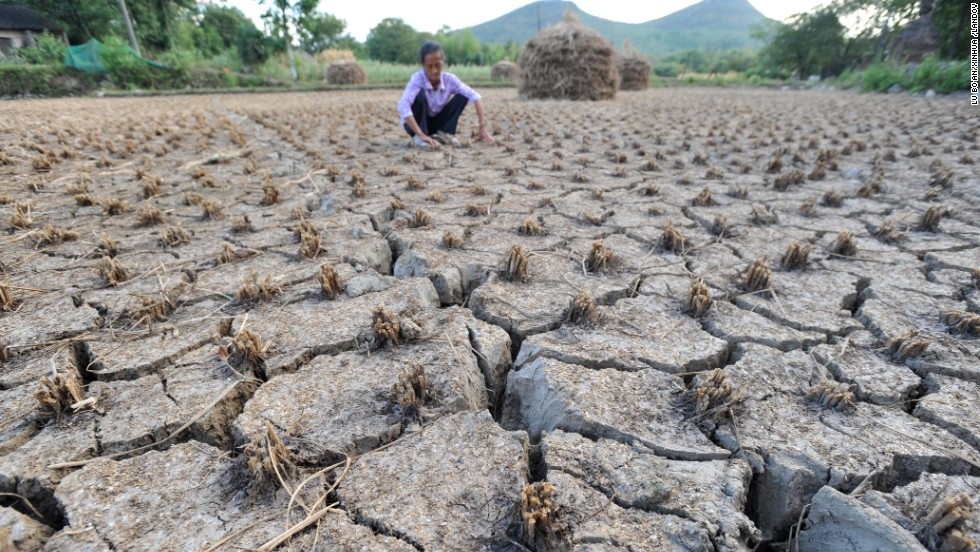 A farmer checks his parched rice fields caused by a lingering drought in the Pixianling Village in southern China on August 9.