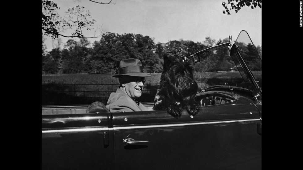 President Franklin D. Roosevelt drives in his convertible with his dog Fala.