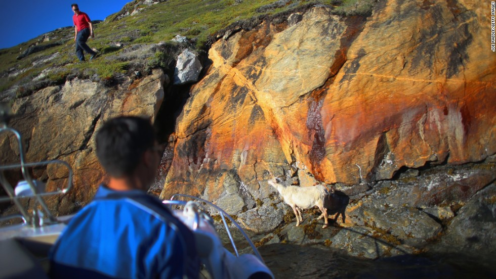 """We're used to change,'' said Greenlander Pilu Neilsen. ""We learn to adapt to whatever comes. If all the glaciers melt, we'll just get more land.""  Nielsen and his brother Kunuk, piloting the boat, try to capture a goat that became stuck at the bottom of a cliff near the water on the family's farm on July 30 in Qaqortoq."